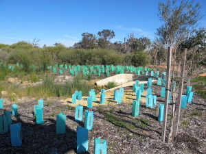 Revegetation works in Castlewood Wetlands by community