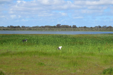 Permalink to: Swan Coastal Plain Wetlands